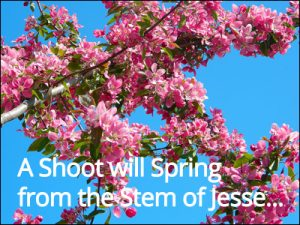 a shoot will spring from the stem of Jesse