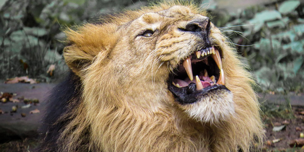 Let The Lion Roar A Prophetic Intercessory Encounter By James W Goll