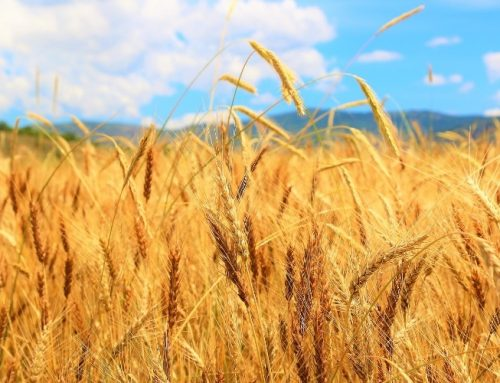 A Prophetic Word—It's Harvest Time for Your Life!