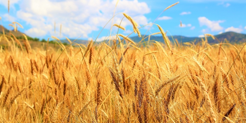 It's Harvest Time for Your Life